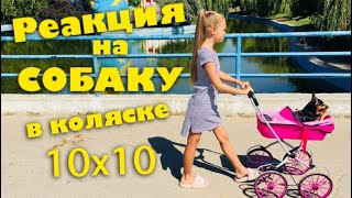 Реакция людей на собаку в коляске / Пранк ЧЕЛЛЕНДЖ 10x10 / Смешное видео про собак