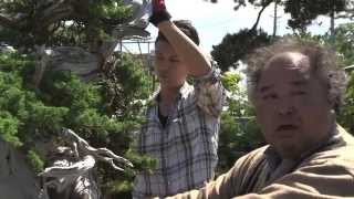 "Now you can see ""Bonsai Warrior"" Video here introducing Masashi Hir..."