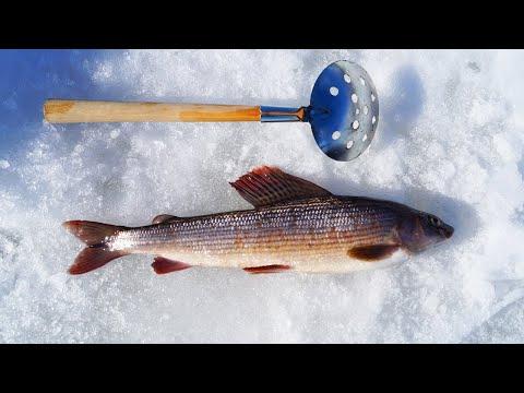 рыбалка на печоре вконтакте