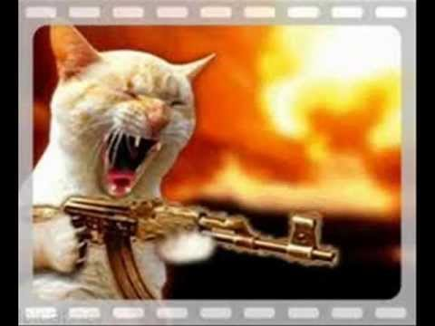 Funny Cats Vs Dogs With Guns