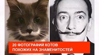 20 ФОТОГРАФИЙ КОТОВ, КОТОРЫЕ ПОХОЖИ НА ЗНАМЕНИТОСТЕЙ!