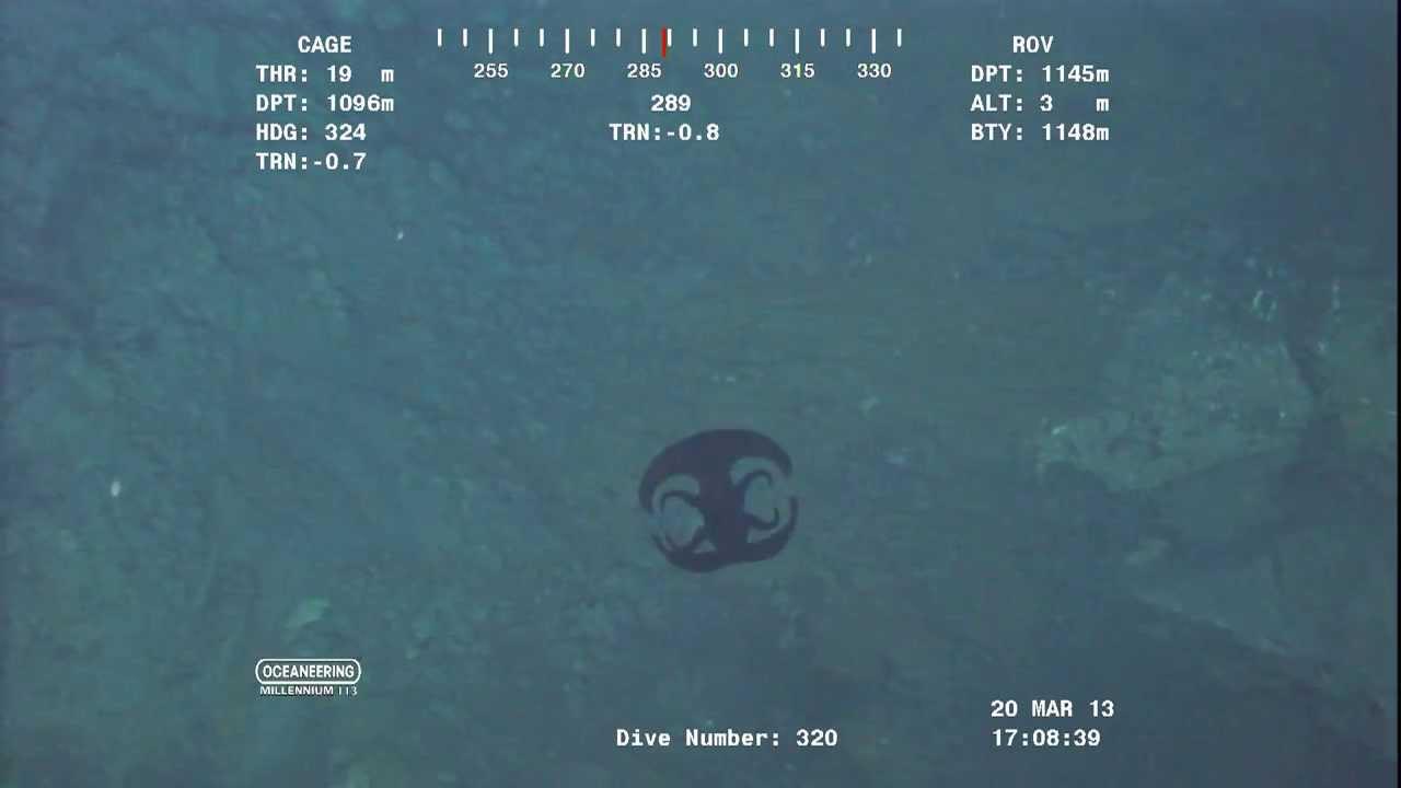 Alien Looking Creature Transforming Near Ocean Floor Over Feet Video From Rov Youtube