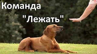 Лежать. Как научить собаку команде Лежать / Teach a Dog to Lay Down