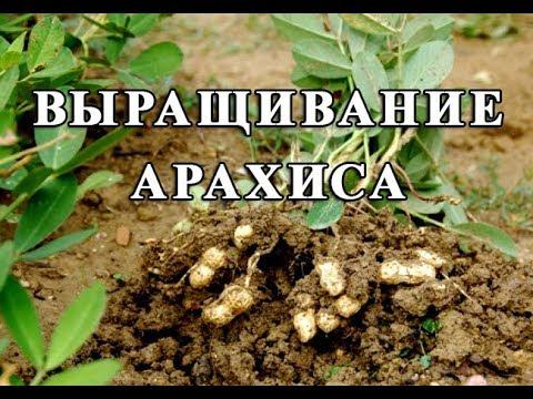 Вопрос: Когда в России по регионам начинать посадку огорода?