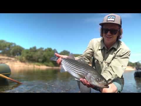 fly-fishing-for-river-striped-bass-in-california