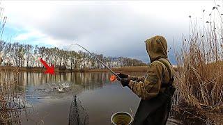 О ТАКОМ КЛЁВЕ ТОЛЬКО МЕЧТАТЬ Карась весной рыбалка на карася ловля карася весной карась