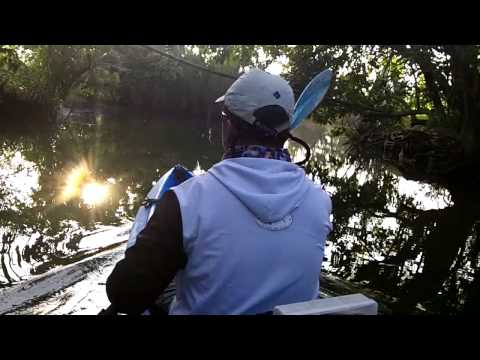 Kayak Fishing Deep in the Mangrove Forest - Part 1