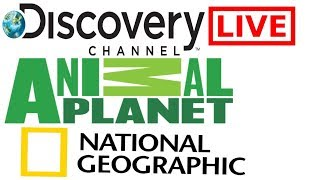 Watch National Geographic Channel • Animal Planet • discovery Live
