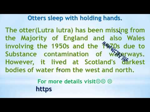 Otters sleep with holding hands