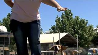Georgia & Cecile on World's Dog Trainer (Part 1 of 2)