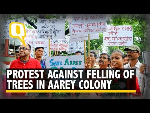 Protests Erupt as BMC Okays Felling of 2,700 Trees in Aarey Forest   The Quint Mp3
