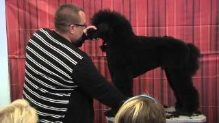 Standard Poodle Grooming By Colin Taylor - Salon & Competition