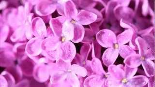 Буйство Цветов - Красивая Музыка