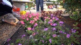 Garden Tips at Garden2Blog | At Home With P. Allen Smith