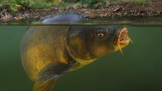 Sazan Balığının En Sevdiği 6 Yem.