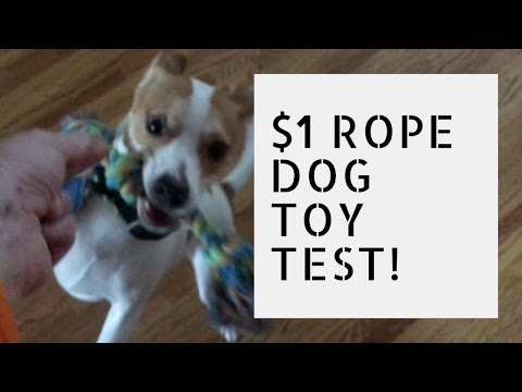 $1-rope-dog-toy-review---is-it-any-good?