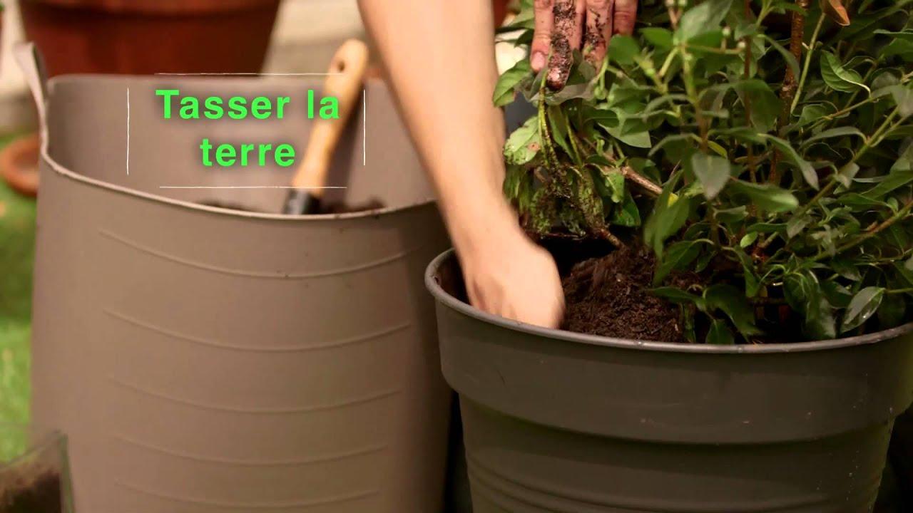 Arbuste Persistant Pour Pot comment planter et entretenir un arbuste persistant ? - youtube