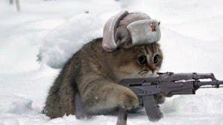 военный кот