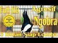 Masteran Kacer Full Hd Ngekek(.mp3 .mp4) Mp3 - Mp4 Download