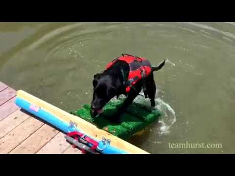 Dog Ramp for a Dock or Pool