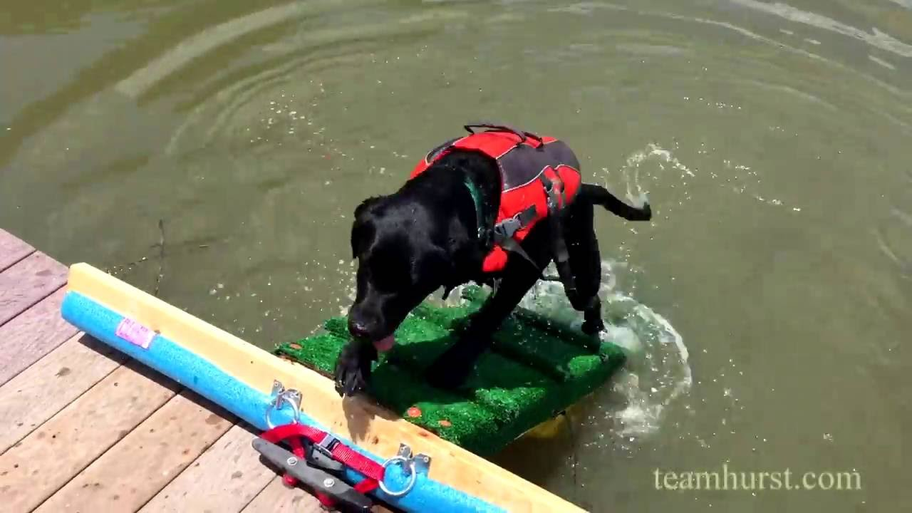 Dog Ramp For A Dock Or Pool Youtube