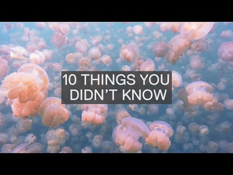 10 AMAZING FACTS ABOUT JELLYFISH