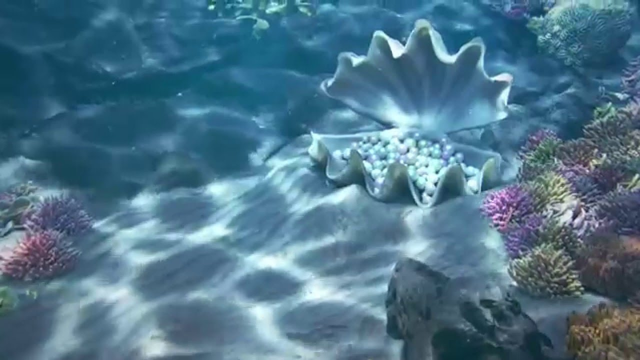 Ocean Life Video Animated Wallpaper Www Wallpaperty Com Youtube