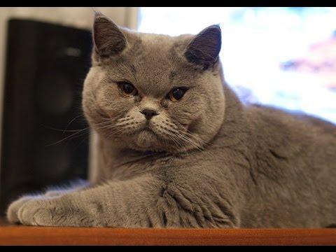 Что Будет Если Разозлить Кота!