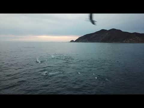 Pt Mugu Dolphins