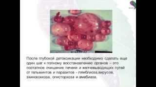 Системная программа восстановления печени и поджелудочной железы