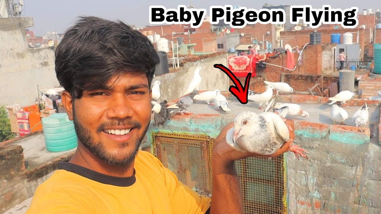 Download Pigeon Catching Baby Flying 😀