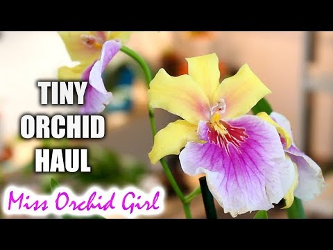 Tiny Orchid Haul - New hybrids on the market!