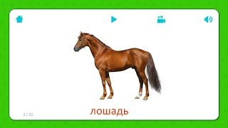 Лошадь - Карточки Для Детей - Домашние Животные - Карточки Домана