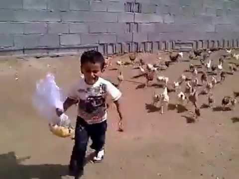 طفل سعودي يلحقه الدجاج وهو يبكي (مقطع مضحك )