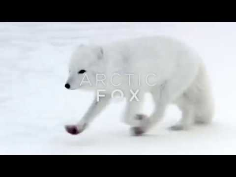 "'""I GOT CHASED BY A POLAR BEAR""!!! Never Alone"