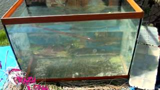 CRAZY FISH SCALP MINNOW