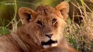 (1.8) Voyages au bout du Monde - Au Kenya, les Reserves du Masai Mara et du Kaikipia