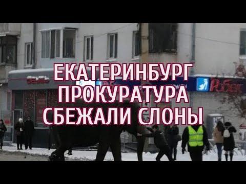 🔴 В Екатеринбурге к директору цирка, из которого сбежали слоны, пришла прокуратура