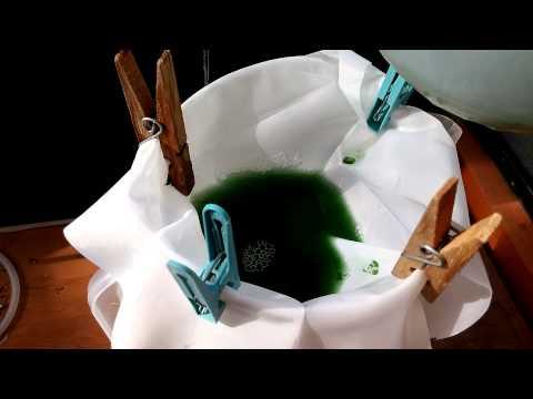 Harvesting fresh spirulina