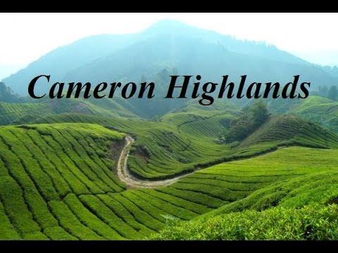 Butterfly garden & Tea Plantation (Cameron Highlands) Part 6