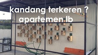 Download Video KANDANG TERNAK LOVEBIRD SISTEM KOLONI TERKEREN MP3 3GP MP4