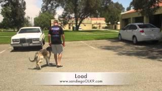 "San Diego Dog Training; 6mo. German ""silver"" Shepherd."