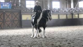 Irish Cob Western Horsemanship