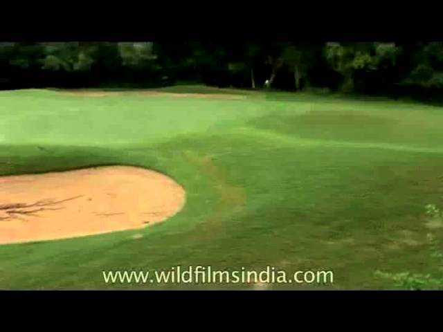 One of the oldest golf-courses in Asia - Delhi Golf Club