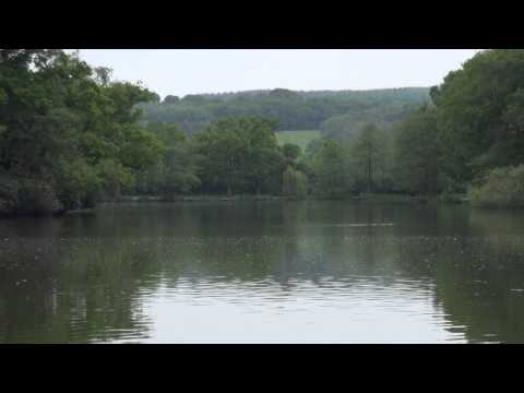 BURY HILL FISHERIES, DORKING, SURREY, ANGLERS MAIL TACTICAL BRIEFINGS