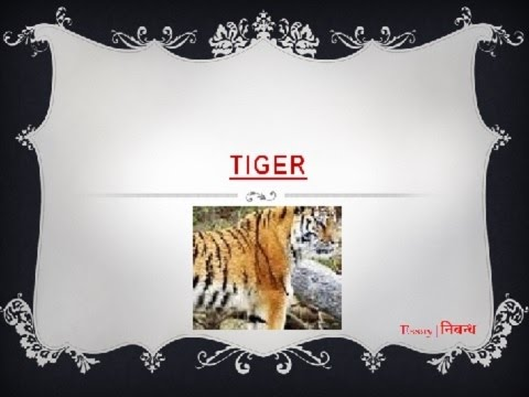 an essay on tiger for kids in english language  youtube an essay on tiger for kids in english language