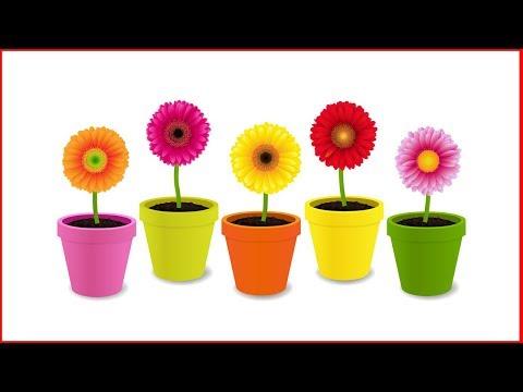 Вопрос: Какие комнатные цветы неприхотливы в уходе?