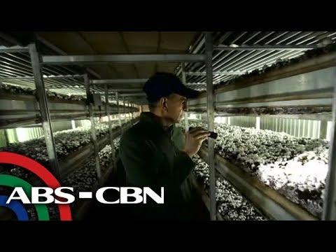 POEA: Wala pang job order para sa mushroom pickers sa Canada