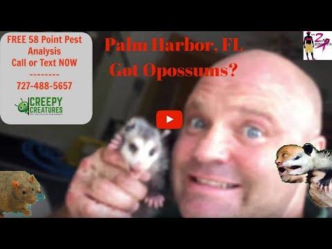 Mother Opossum Dies Babies Pour Out