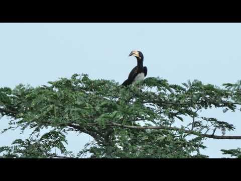 Bildershow vertont_Blitzbesuch in Ghana
